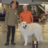 Expositions-canines-Dogshows